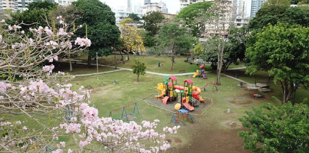 Panamá apuesta por sembrar más árboles