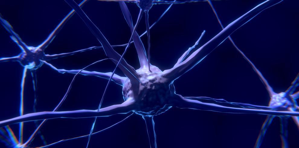 Descubren mecanismos moleculares vinculados al autismo y a la esquizofrenia