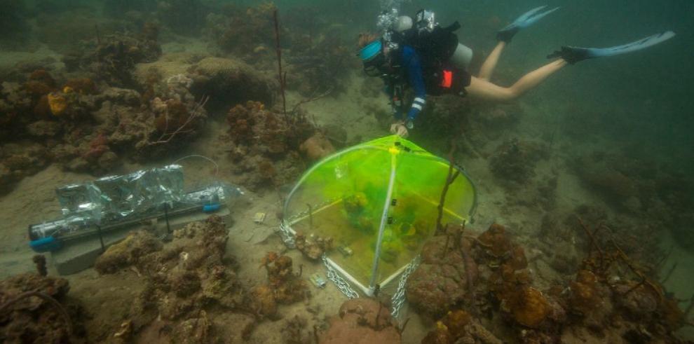 Algas que predicen el futuro de la vida en los océanos