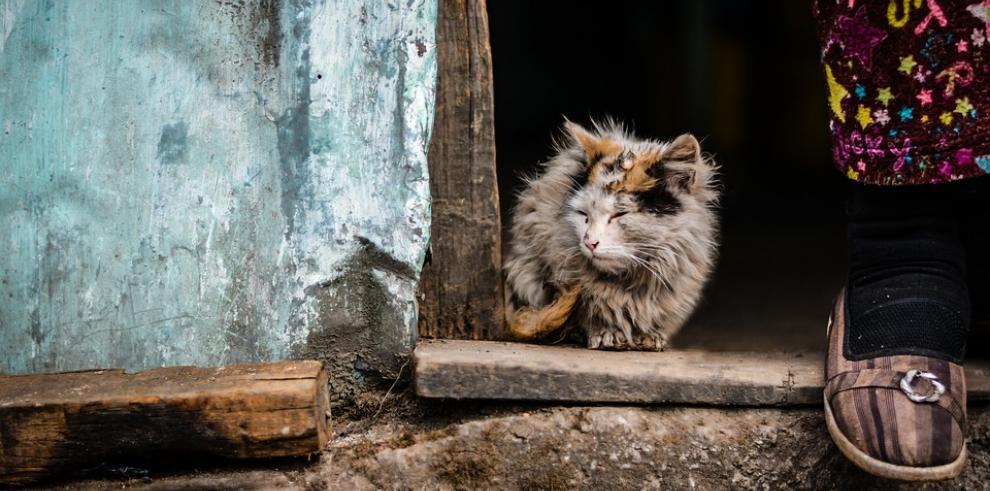 La FAO pide reducir la pobreza para erradicar hambre en Europa y Asia central