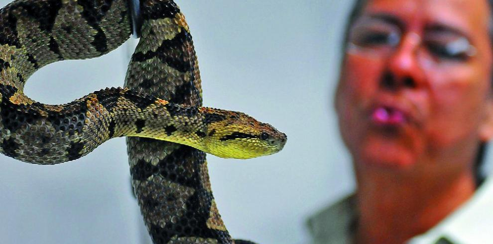Estudian culebras endémicas en Galápagos