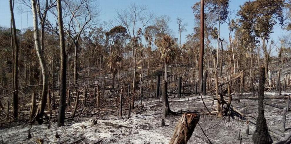 Incendios amenazan la Reserva de la Biosfera Maya en Guatemala