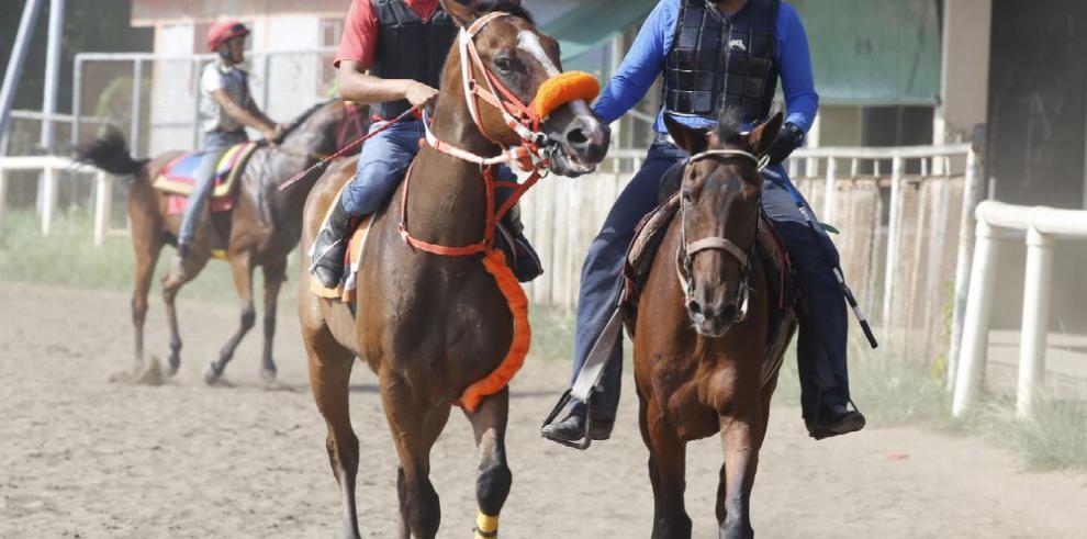 Más caballos saldrán de los predios hípicos