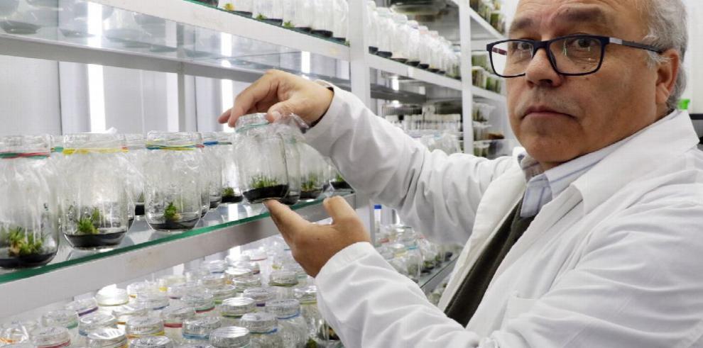 Planta antártica puede actuar como filtro solar