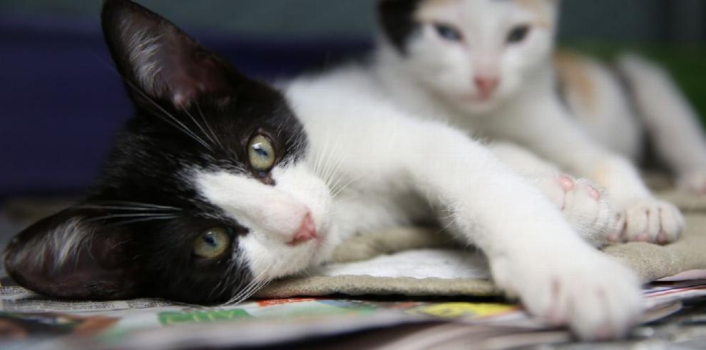 La alcaldía capitalina lidera campaña para esterilizar perros y gatos