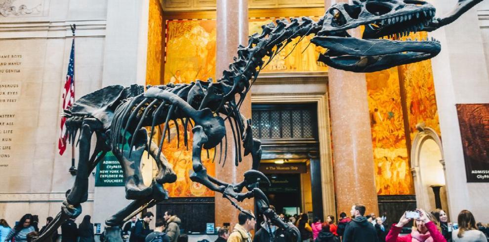 Visitantes descubren sus propios fósiles
