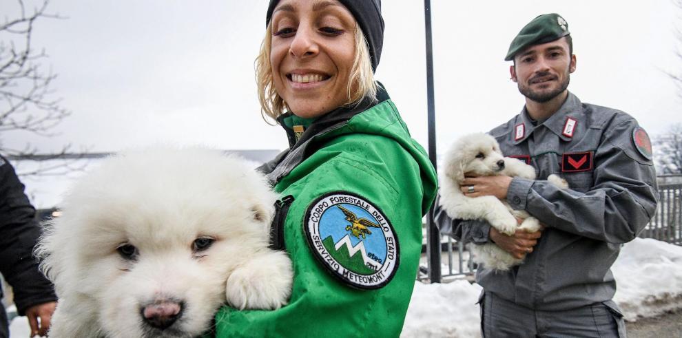 Encuentran cachorros en el hotel sepultado por alud en Italia
