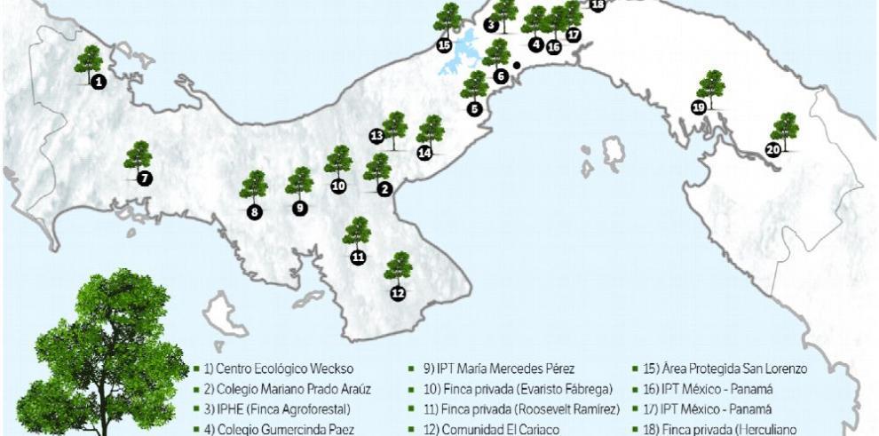 Más de 26 sitios se reforestan hoy en Panamá con la Alianza del Millón