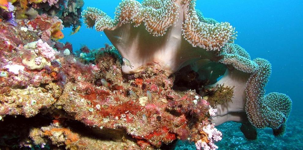 ONU denuncia la perdida de la mitad de arrecifes de coral del mundo