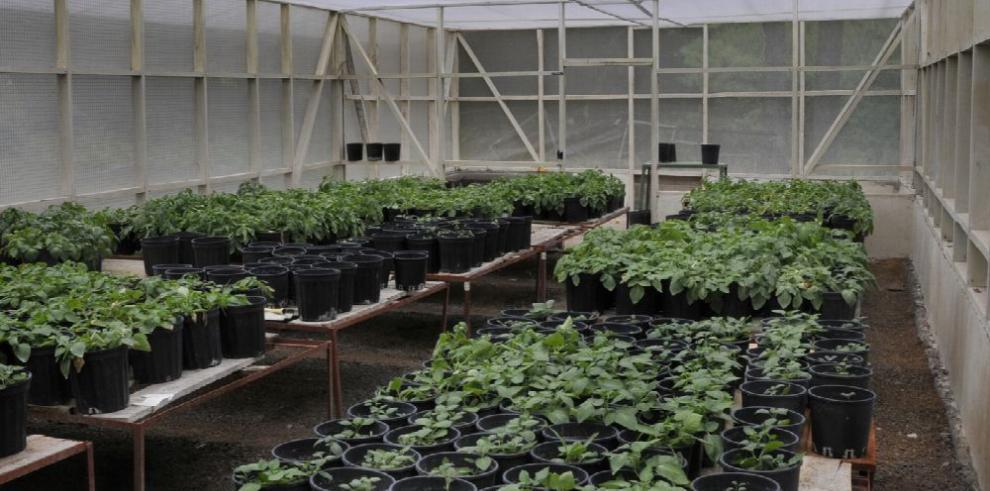 Foro centra agricultura en ambiente controlado