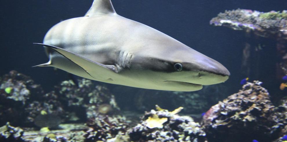 Muere joven tras ser atacado por un tiburón en una playa del este de Cuba