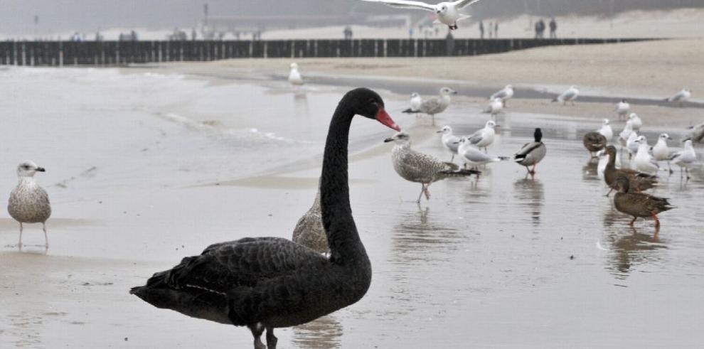 Prados marinos reducen la contaminación marina