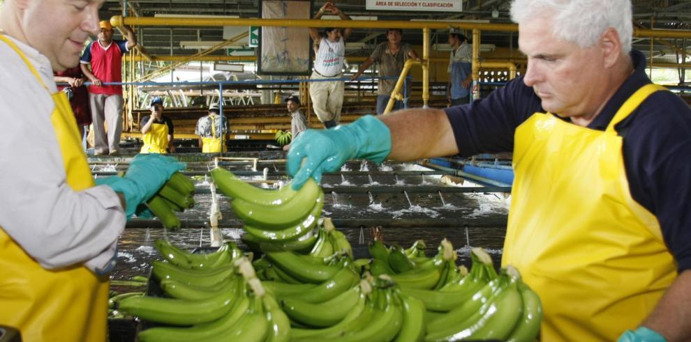 Huelga bananera en Bocas deja pérdidas diarias por $600 mil