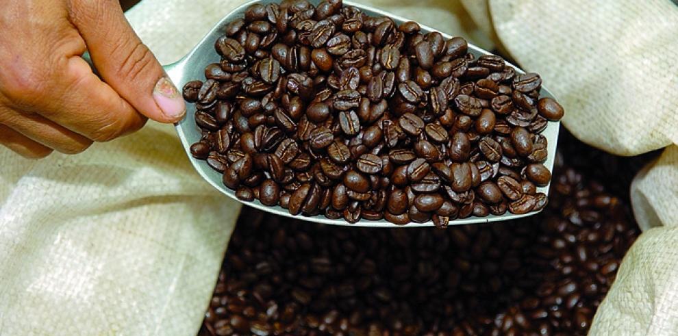 Ingresos por exportación de café hondureño suben 49.5%