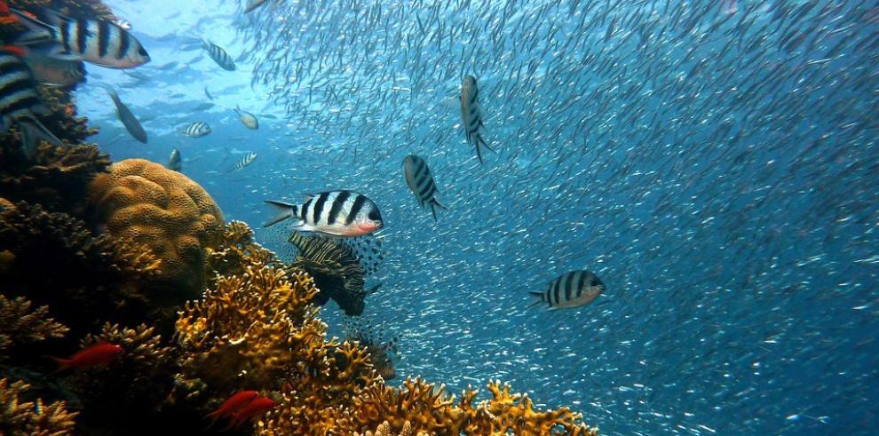Científicos alertan de rápida degradación de los mares en los últimos 20 años