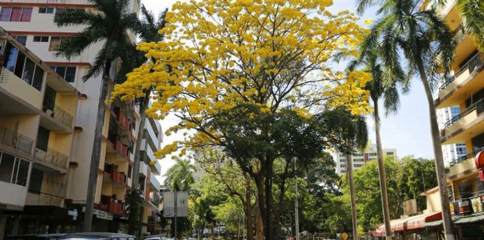 La flor del guayacán
