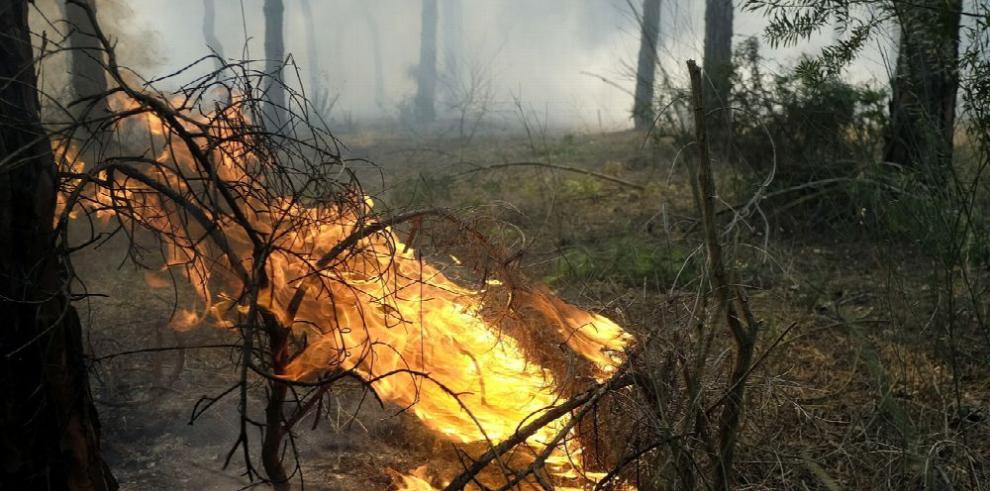 Incendio amenaza parque nacional de Doñana