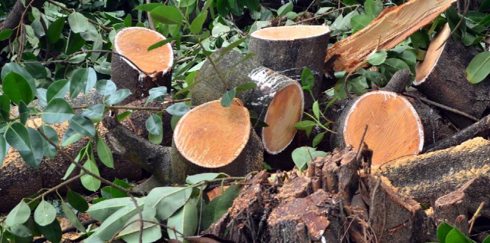 Panamá pone en marcha alianza contra la tala ilegal