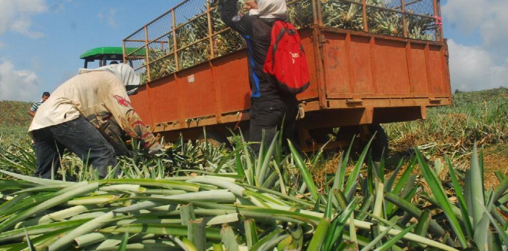 Agro panameño apenas creció 1.1% hasta septiembre