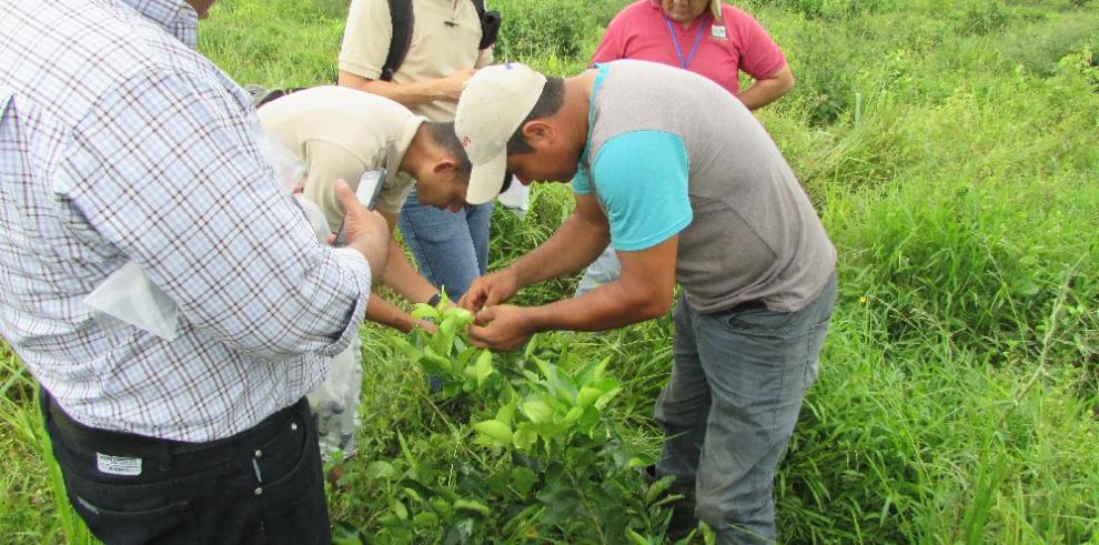 Personal del MIDA en Colón se actualiza en diagnostico de plagas