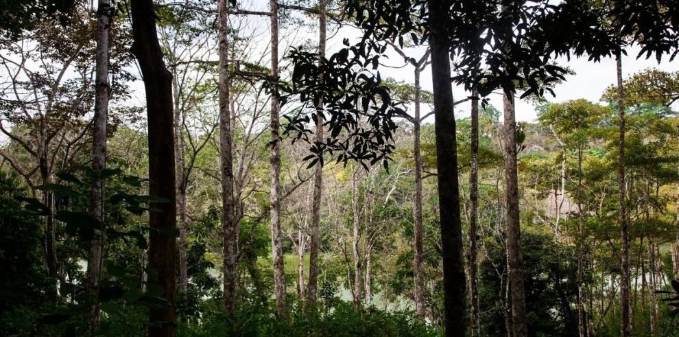 ONU REDD urge más financiamientos para la gestión forestal