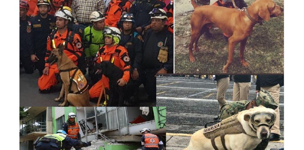 Héroes de cuatro patas ayudan a salvar vidas en el terremoto de México