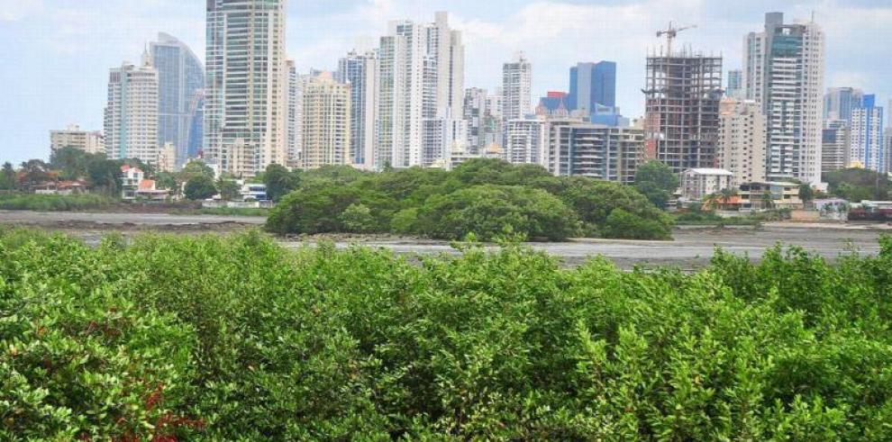 El Niño destruyó hasta el 70 % de varios manglares de Panamá en 2016