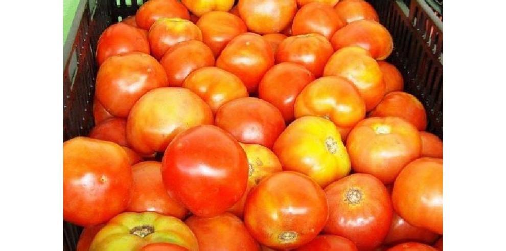 Tras firma de acuerdo, IMA calma tensiones de tomateros chiricanos