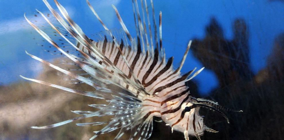Alertan del daño económico de la introducción de especies foráneas