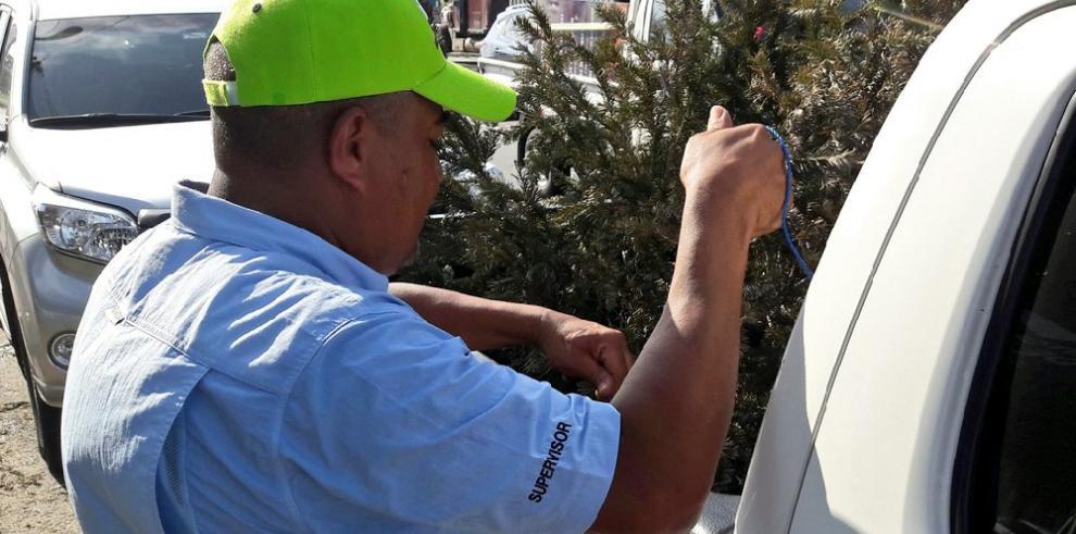 AAUD recolecta arbolitos de Navidad en la sede de la UTP