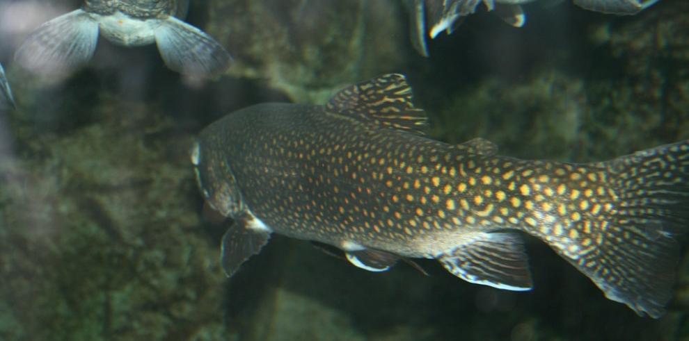 Pequeñas islas piden ayuda para reforzar acuicultura ante el cambio climático