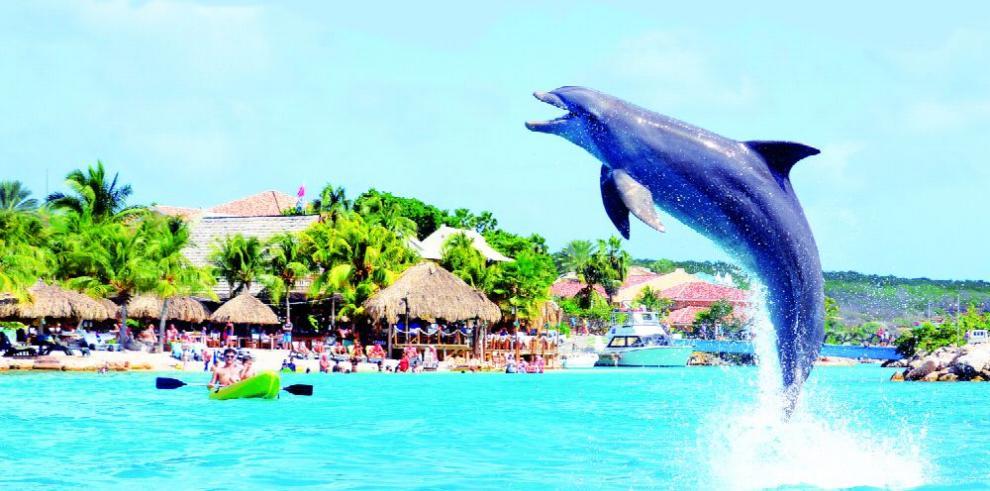 Curazao, un viaje con los delfines