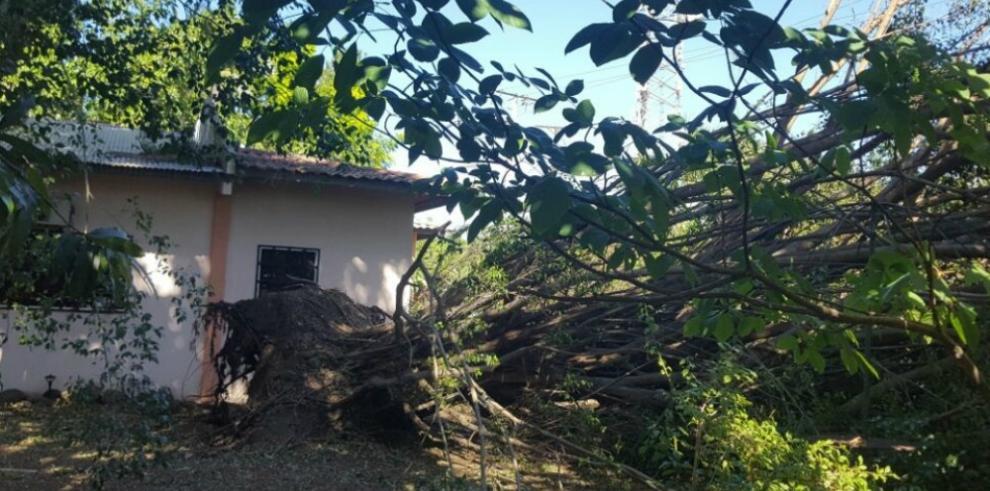 Fuertes vientos provocan caídas de árboles y tendido eléctrico