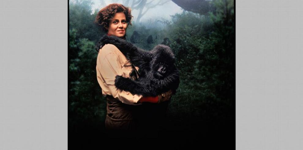 Relatos de la vida de Fossey y Versace
