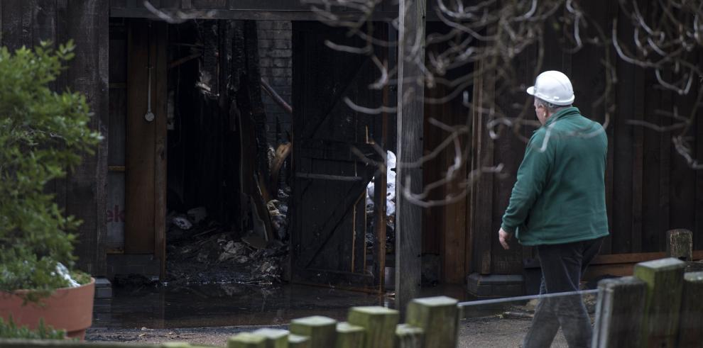 Ocho personas afectadas y un animal muerto por un incendio en zoo de Londres