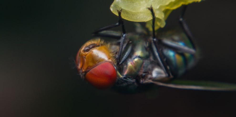 Larva emite gases de efecto invernadero