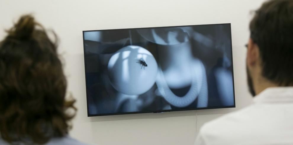 'Ahora la gente entiende el arte contemporáneo'