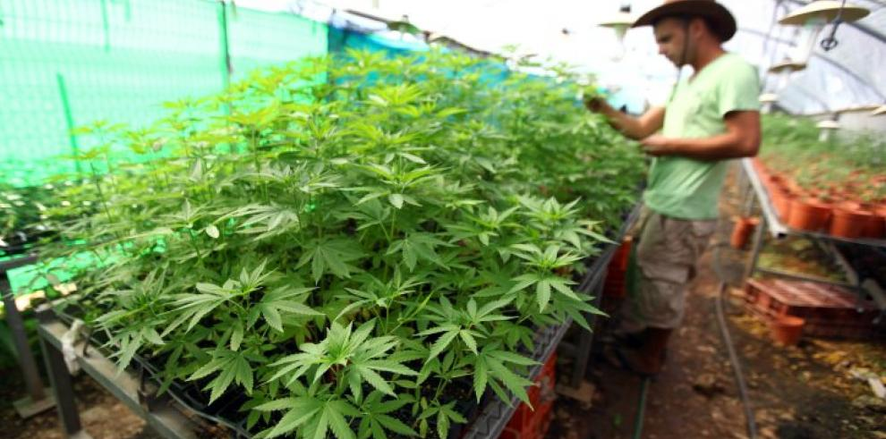 Lanzan primer estudio con cannabis para pacientes con cáncer