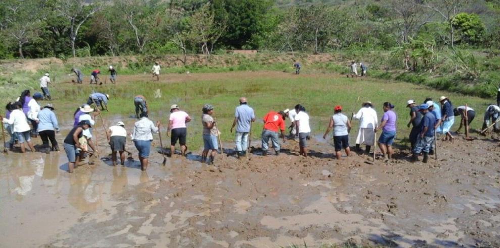 Beneficiarios de subsidios serán proveedores de huertos escolares, Senapan