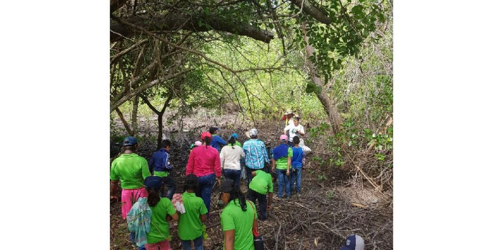 Fenosa cierra su plan de reforestación con 10 mil plantones sembrados