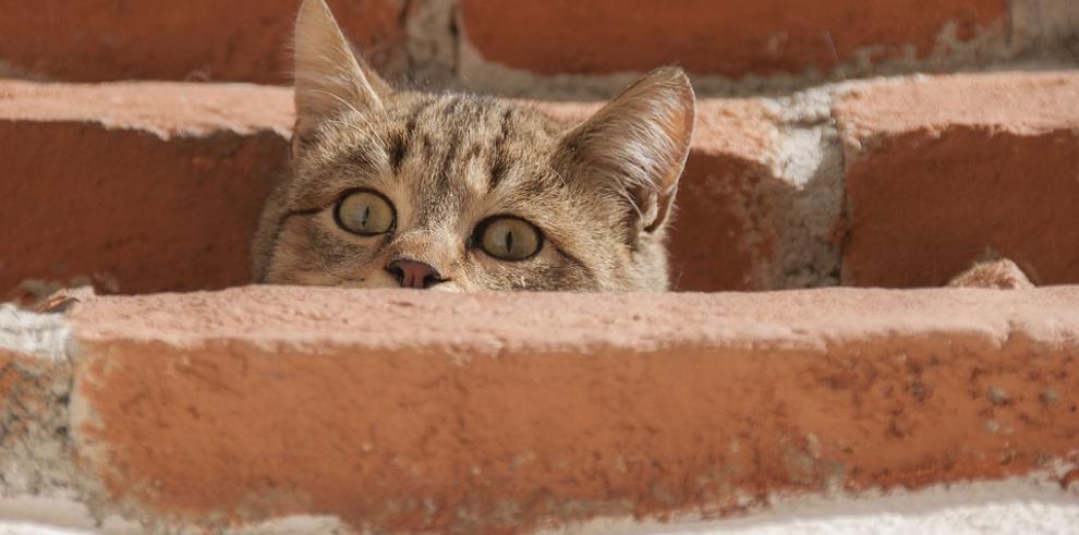 Investigan a supuestos estudiantes panameños por quemar vivos a seis gatos