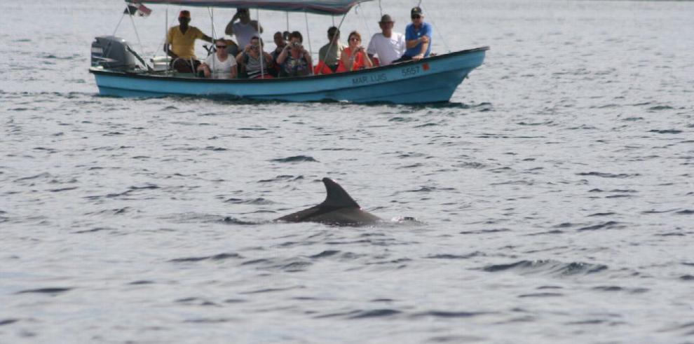Capacitan a 110 capitanes y guías en el avistamiento de cetáceos