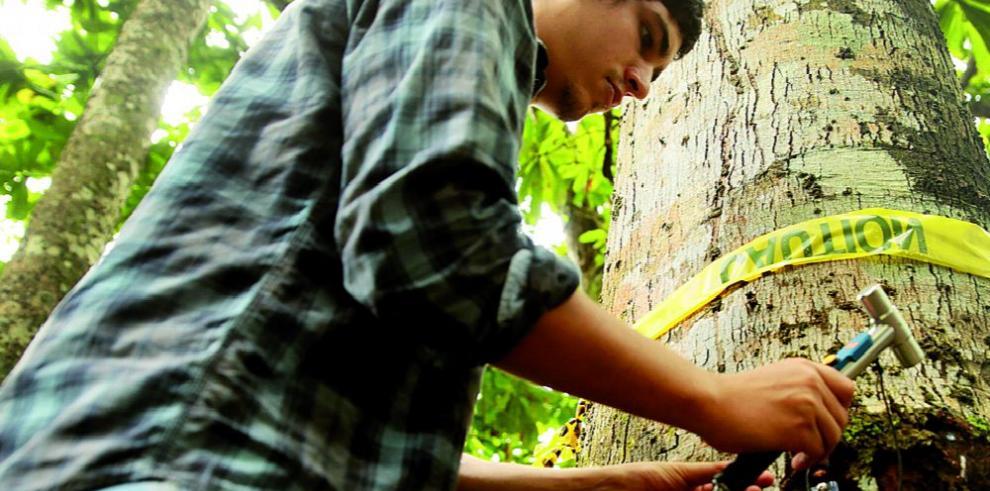 STRI estudia árboles con tecnología sónica
