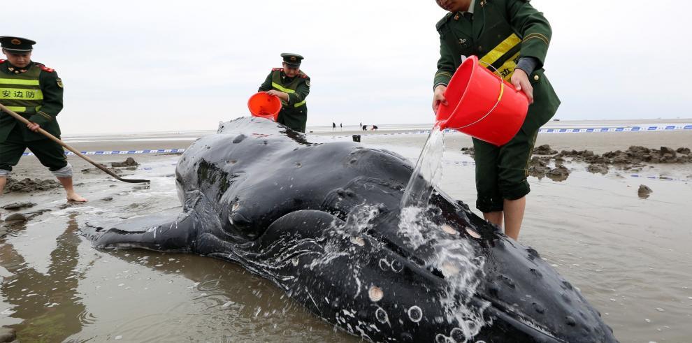 Muere una ballena tras quedar varada tres días en la costa china