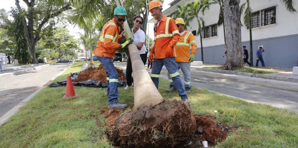 Panamá, una nueva ciudad más verde con árboles y flores