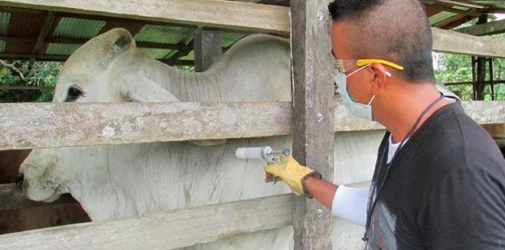 Colombia declara emergencia sanitaria en todo el país por fiebre aftosa
