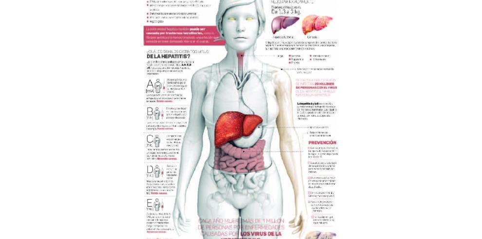 ¿Cómo ataca la hepatitis?