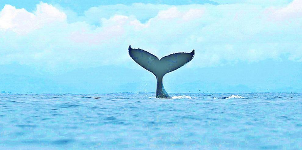 Antepasados de ballenas ya tenían buena audición