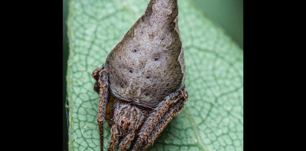 ¿Por qué nos llaman bichos raros…?