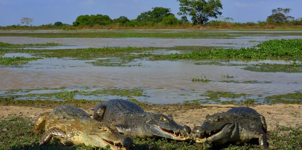 El mar inundó la Amazonía en la antigüedad dos veces, según un estudio